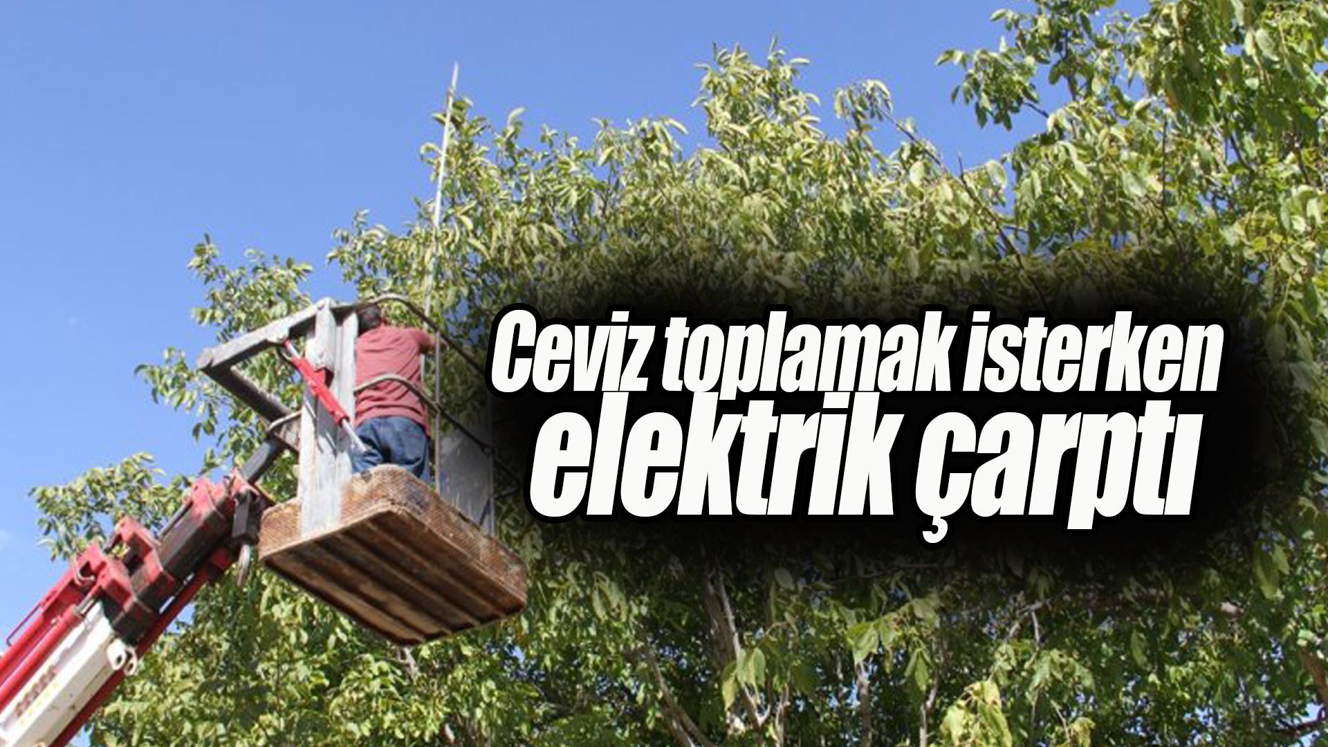 Ceviz toplamak isterken elektrik çarptı