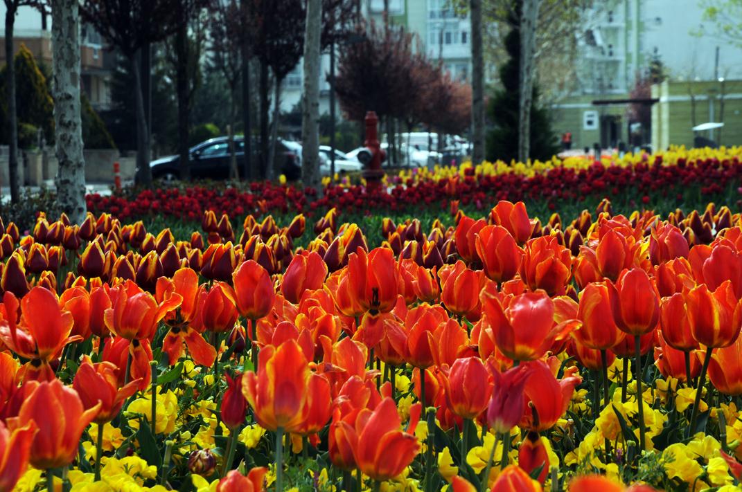 Laleler diyarı şirin Kırşehir
