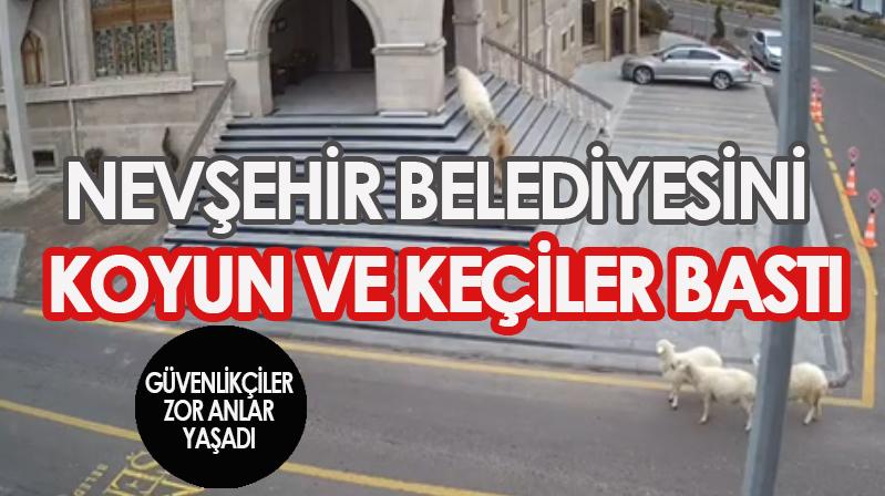 Nevşehir Belediyesini koyunlar bastı