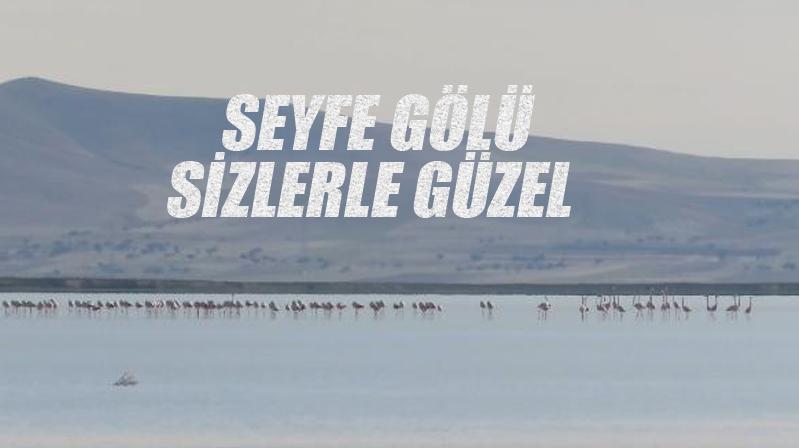 Seyfe Gölüne kuşlar gelmeye başladı